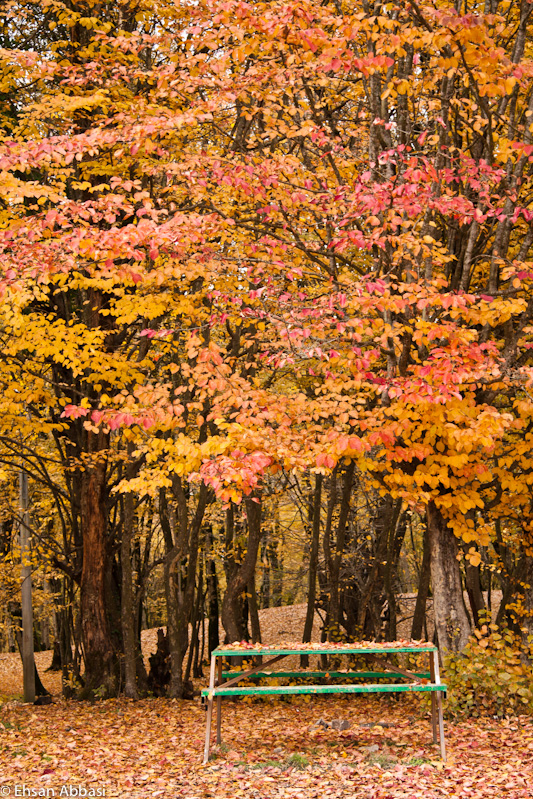Bench and Fall Leaves