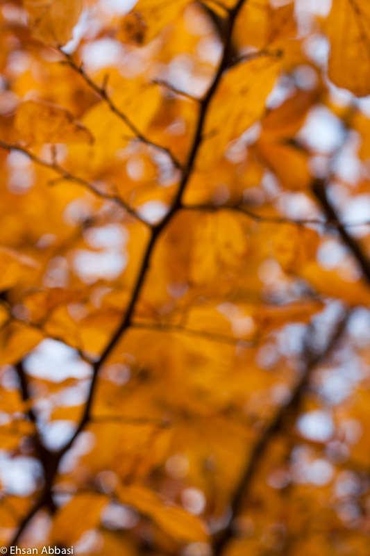 Bokeh of leaves